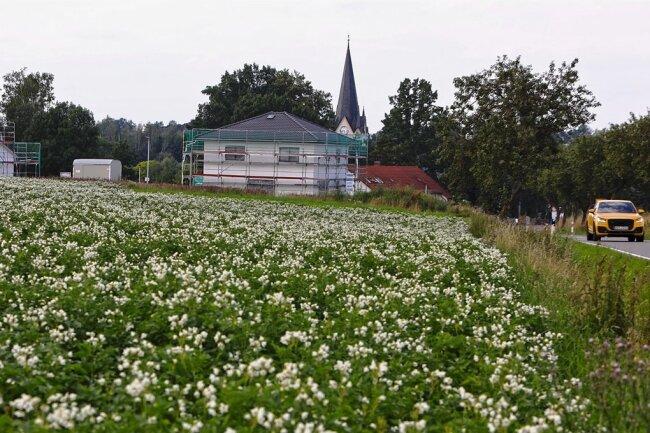 Dort, wo jetzt noch Kartoffeln angebaut werden, ist ein Solarpark geplant. Rechts ist die Verbindungsstraße zwischen Oberwiera und Neukirchen zu sehen.
