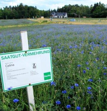 Das Schild klärt auf, was auf dem Feld wachsen soll. Die Natur hat etwas dagegen.