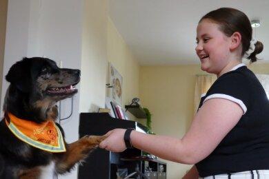 """Gib Pfötchen - Marie Dudeck und Luna verstehen sich. Nachdem der Assistenzhund, der als """"Ausweis"""" ein orangefarbenes Lätzchen trägt, im Haus der Familie im Gornauer Ortsteil Dittmannsdorf eingezogen ist, haben sich die beiden schon gut kennengelernt. Nach dem Grundgehorsam muss Luna nun lernen, auf die 13-Jährige aufzupassen."""