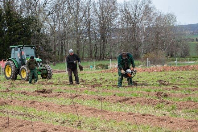 Spaten haben ausgedient. Für die Pflanzlöcher für die jungen Bäume greifen die Arbeiter zu moderner Technik.