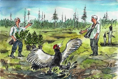 Wie das Birkhuhn in den Feuchtgebieten des Erzgebirgskammes zurecht kommt - davon hat sich Ralf Alex Fichtner ein Bild gemacht.