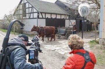 Für die Dreharbeiten wurden zwei Rinder vor die Kutsche gespannt.