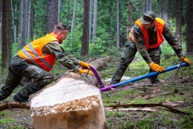 Im Juni begannen Soldaten ihre Arbeit im Falkenauer Wald. Sie entfernten Borke von Fichtenstämmen, um Käferbefall entgegenzuwirken.