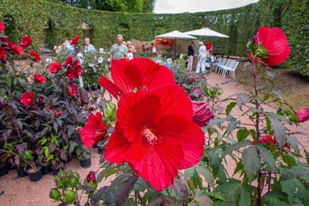 Lichtenwalde: Knapp 10.000 Gäste strömen zu Messe Haus- und Gartenträume