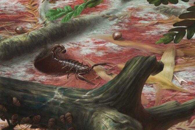 Den Namen Opsieobuthus tungeri hat Ronny Rößler, der Direktor des Museums für Naturkunde Chemnitz, der fossilen Skorpionart verliehen.