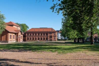 Auf der geschätzt 2500 Quadratmeter großen Schotterfläche soll ein Sportplatz entstehen. Doch dafür müssten die fünf stattlichen Kastanien (r.) an der Bismarckstraße gefällt werden.