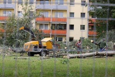 Für den Bau eines neuen Seniorenzentrums verschwindet nach umfangreichen und lautstarken Fällarbeiten für die Nachbarn im Glauchauer Wohngebiet Sachsenallee das Großgrün vor ihren Balkonen.