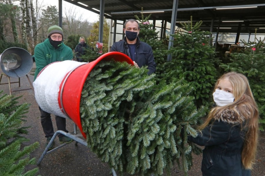 Beim Weihnachtsbaumverkauf in der Garten Baumschule am alten Sachsenring ist Karsten Wirth (Mitte) aus Falken im wahrsten Sinne des Wortes Stammkunde. Mit Enkeltochter Jody (11) kam er am Samstag zum Baumkauf.