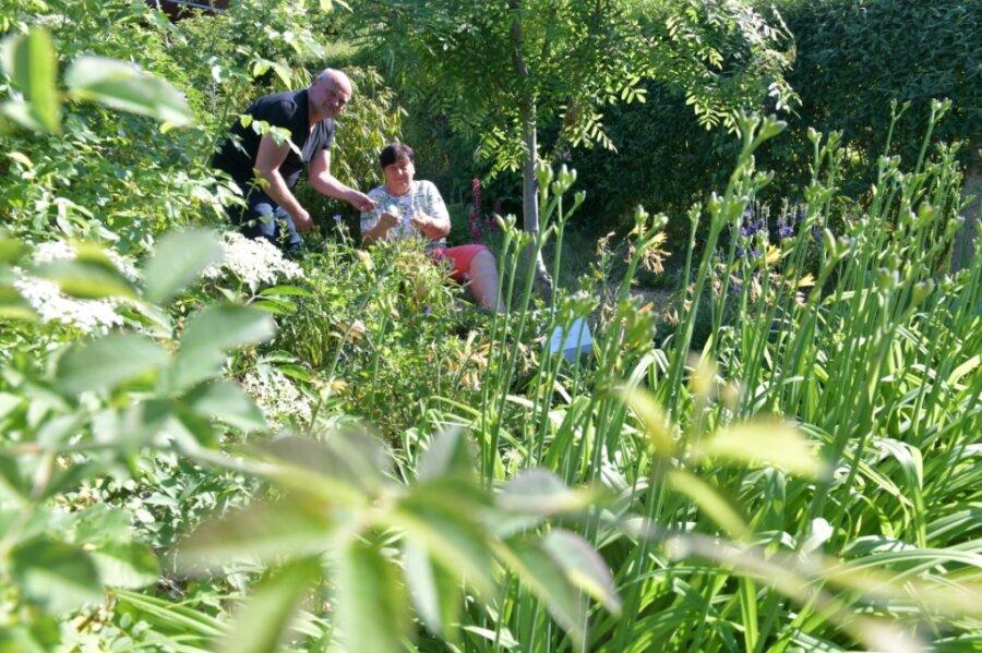 """Idylle pur: Sigrid Lippmann und Steffen Weiser im Naschgarten der Freiberger Kleingartenanlage """"Albert Funk""""."""