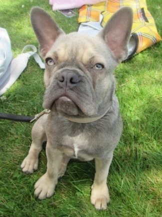 Eine junge französische Bulldogge ist am Montag der Grund für einen handgreiflichen Konflikt am Untreusee bei der Stadt Hof gewesen.