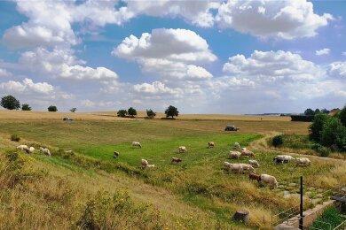 Blauer, wolkenverhangener Himmel, Bäume säumen die Wege und Kühe weiden sich am Gras. Idylle pur bei Königsfeld.