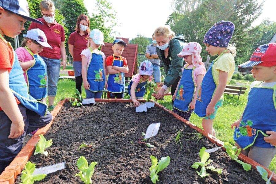 """""""Schatzinsel"""" züchtet eigenes Gemüse"""