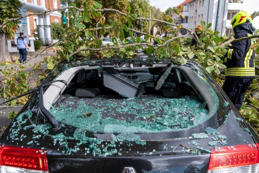 Äste auf Straße gestürzt und Auto zerstört - Sturm hält Feuerwehrleute auf Trab