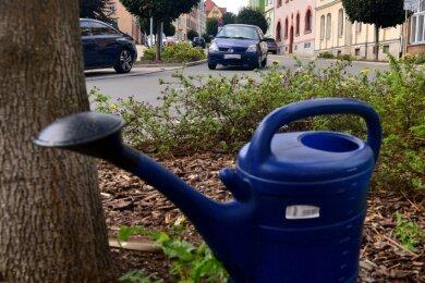 Bäume wie die an der Lutherstraße in Mittweida werden je nach Bedarf vom Bauhof gegossen.