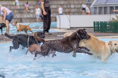 Nicht nur Zwei-, sondern auch Vierbeiner genießen den Ausflug ins Freibad - wie hier am vergangenen Samstag im Buchholzer Freibad. Dort kamen rund 80 Hunde, um sich abzukühlen und miteinander zu spielen.