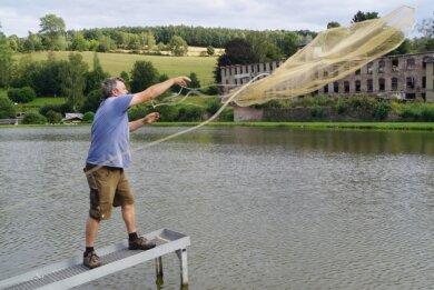 Mit einem Netz werden Karpfen aus einem Teich geholt, der neben dem Laden der Fischzucht Schröder in Cunersdorf liegt, um zu schauen, wie sich die Flossentiere im zweiten Jahr entwickelt haben.