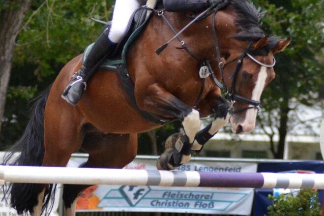 Turnierleiter Hardy Heckel vom RFV Lengenfeld auf Quint beim Springen um den Großen Preis von Lengenfeld. Heckel hatte zuvor bei der Piehler Youngstertour mit Charles, Quinto und Clayre die Finals für vier- fünf- und sechsjährige Pferde gewonnen.