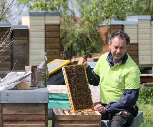Bienenzüchter Peter Gruner besucht mit seinem Bienenvolk auch regelmäßig Schulen und Kindergärten.