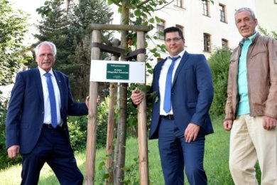 Das Bäumchen wächst und gedeiht: Antonius Wiesemann (links), Bürgermeister von Neuenrade, Thomas Hennig (Mitte), Oberbürgermeister von Klingenthal, und sein 1. Stellvertreter Gerhard Nöbel am Dienstag vor der robusten Winterlinde, die das Trio im Juni 2015 zum 25-jährigen Jubiläum der Städtepartnerschaft gepflanzt hatte.