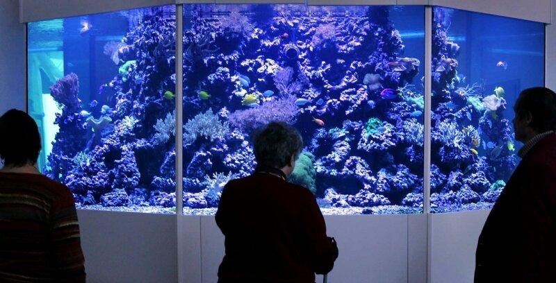 """<p class=""""artikelinhalt"""">Exotisch und beruhigend: Im zwölf Tonnen schweren Aquarium in der Burkhardtsgrüner """"Herr-Berge"""" sorgen Korallen, Krabben und mehr als 100 Fische für einen Ruhepol. Vor allem die an Demenz erkrankten Bewohner bauen dadurch Stress und Aggressionen ab. </p>"""