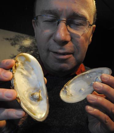 Museumsleiter Steffen Dietz zeigt vogtländische Muschelschalen mit Perlenbildung.