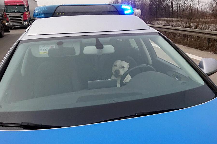 Ein Hund sitzt auf der Autobahn 2 auf dem Fahrersitz eines Polizeiwagens.