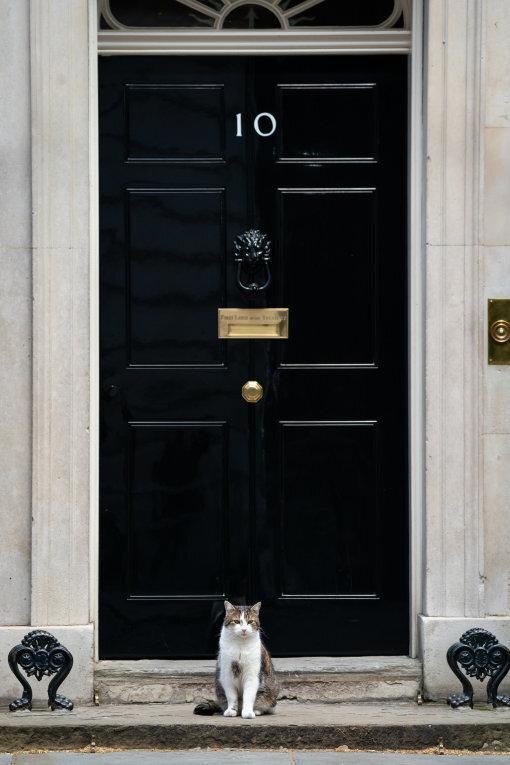 Kater Larry hockt vor der Downing Street 10, der Amtswohnung des britischen Premierministers.