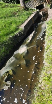 Ein Abwasserpilz in XXL-Größe am Bach-Zulauf.