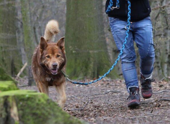 Hundehalter müssen in Meerane demnächst mehr Steuern für ihre Tiere zahlen. Zudem müssen neue Hunde innerhalb von zwei Wochen bei der Stadt gemeldet werden.
