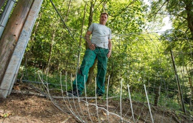 Unbekannte haben an einer schwer einsehbaren Stelle den Zaun des Damwild-Geheges durchtrennt. Falk Ihle gibt seine Zucht nun auf.