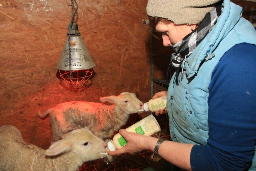 Die Lämmer eines nach der Geburt gestorbenen Schafes zieht Steffi Mey mit der Flasche auf.