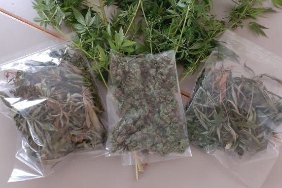 Mittweida: Polizei stellt Cannabis in Wohnung sicher