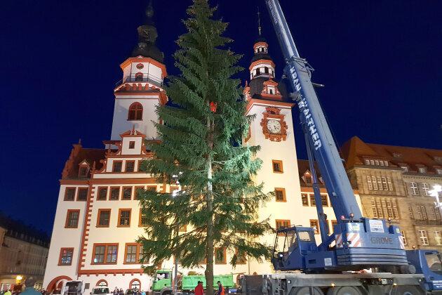Die Chemnitzer Weihnachtsmarkt-Fichte steht