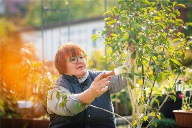 Gartenfachfrau Katrin Keiner aus Dresden verpasst dem jungen Bäumchen einen Weißanstrich.