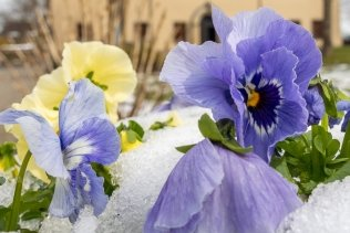 Frost-Schock statt Frühling