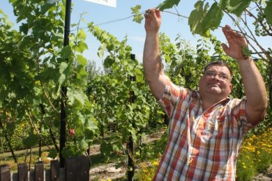 Roy Thiemer baut in seinem Garten Wein an. Um sich zurechtzufinden, hat er sogar Straßenschilder mit Weinbezeichnung angebracht.