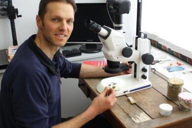 Marcus Kanjar bestimmt am Mikroskop die Art. Das macht er häufig als Erstes, um zu wissen, womit er es genau zu tun hat.