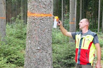 Revierförster Karsten Preußner markiert im Harthwald vom Borkenkäfer befallene Bäume. Sie werden bis Ende August gefällt.