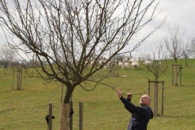Regelmäßig kontrolliert Uwe Mueller die Blüten an seinen 50 Obstbäumen auf der Streuobstwiese in Erdmannsdorf.