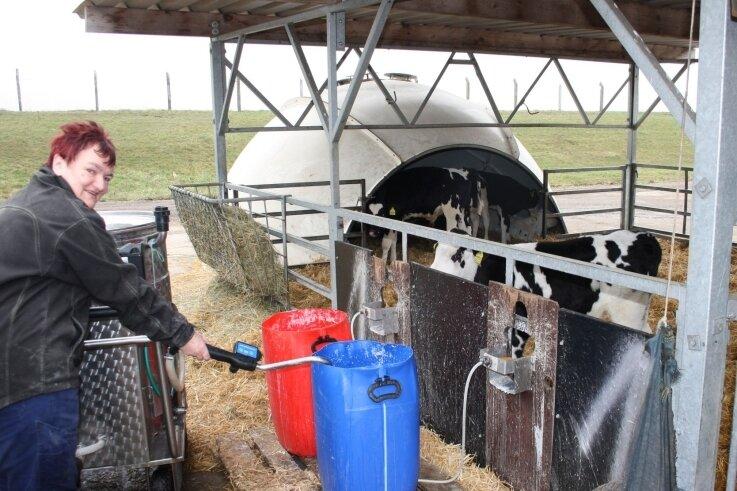 In der Milchviehanlage Lauterbach ist Kälberfrau Margitta Eger dabei, die Tränkeimer mithilfe eines Milchtaxis an einem Großraum-Iglu mit Milch zu befüllen. Die hier zu sehenden Kälber sind drei Monate alt. In solch einemIglu können sich bis zu 16 Kälber aufhalten.