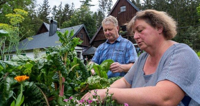 Petra und Andreas Jeschek pflücken Kräuter für das Abendbrot. Mit einer Auswahl werden sie am Sonntag in Grünbach mit von der Partie sein. Foto: David Rötzschke