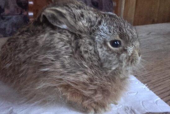 Dieser Hase und noch ein zweites Exemplar wurden von Unbekannten ineiner Mülltonne entsorgt. Sie wurden lebend entdeckt. Doch einer musste eingeschläfert werden, das zweite Tier starb später auch.