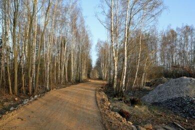 Am künftigen Radweg hat sich nach dem Ende des Bergbaus eine eigene Fauna und Flora entwickelt. Dazu gehören Nashornkäfer und Ölkäfer.