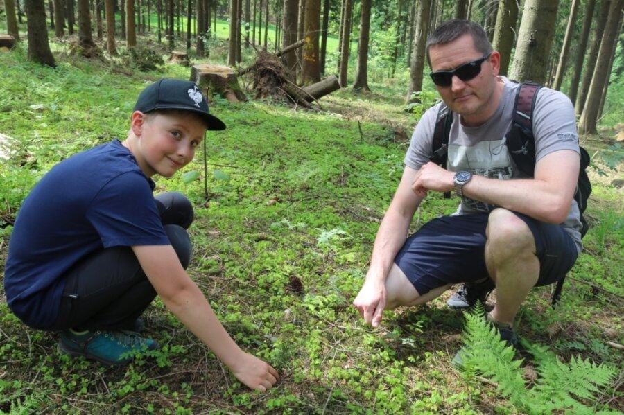 Alfons Richter und Jochen Wendler (von links) suchen zwischen Fichtenzweigen nach den Weißtannen-Pflänzchen.