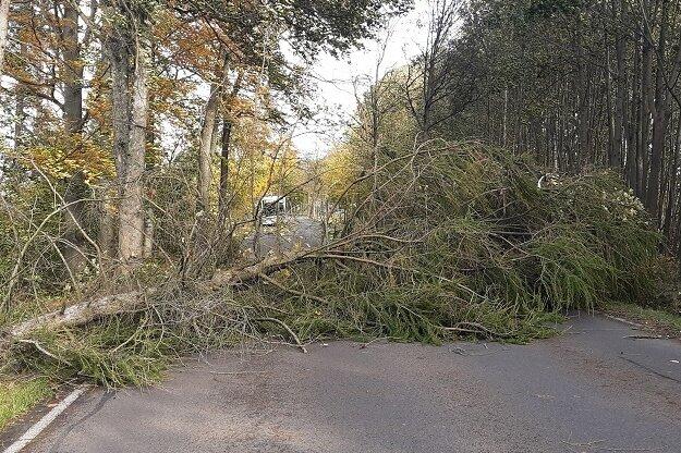 Auf der B 101 lag am Donnerstagvormittag ein Baum zwischen Freiberg und Brand-Erbisdorf.