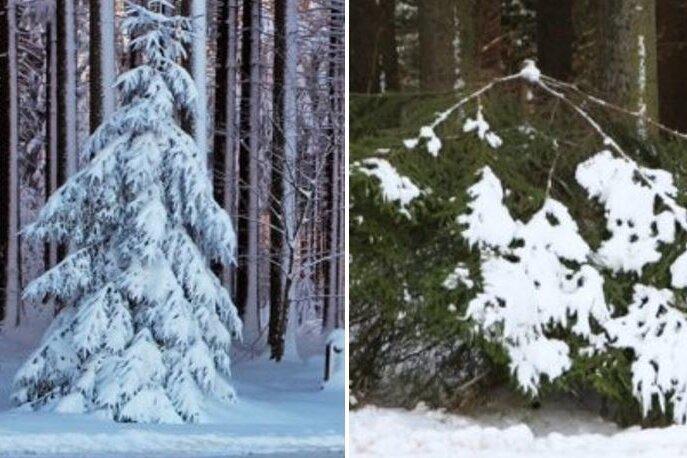 Prächtiger Baum - einfach abgesäbelt