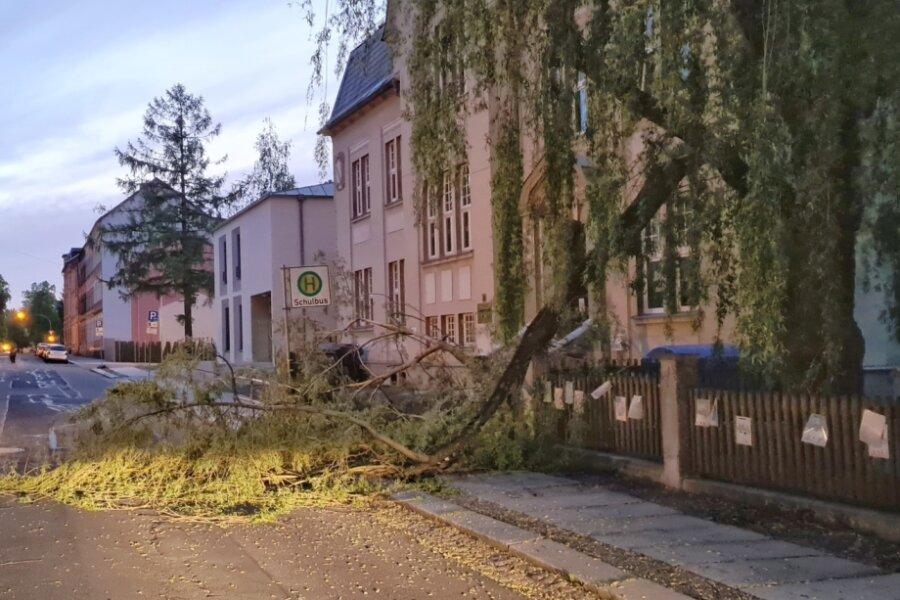 Weiden-Ast stürzt auf Gehweg vor Schule in Auerbach