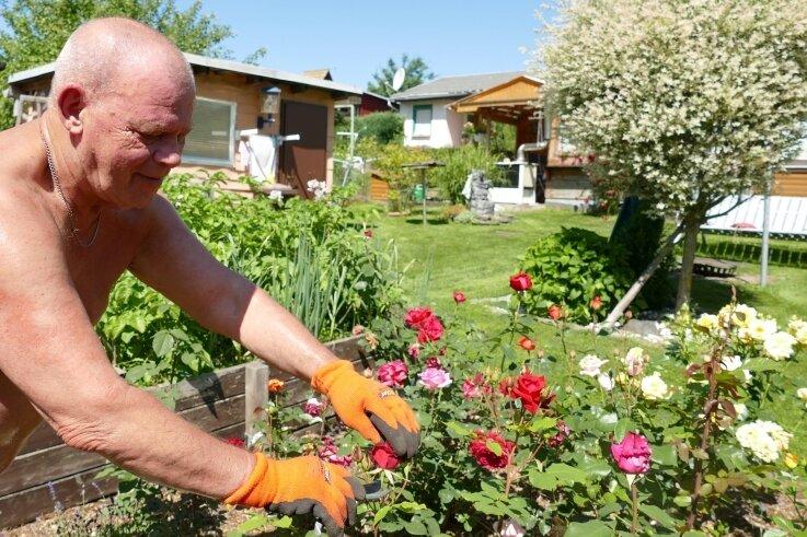 Für Rentner Michael Bauer aus Einsiedel ist sein Garten am Dittersdorfer Südhang im Sommer der schönste Platz.