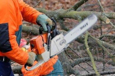 Schöneck hat Baumfällungen wie geplant vornehmen lassen - trotz Kritik von Naturschützern.