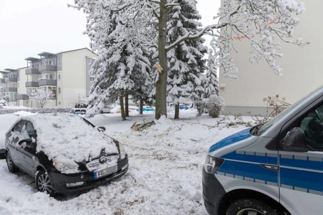 In Freiberg krachte ein starker Ast auf ein Auto und eine Straße. Fünf Feuerwehrleute waren im Einsatz, um den Ast zu entfernen.